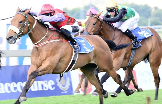Boland Stud's plethora of high class recent performers