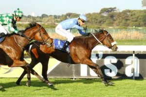 Boland Stud - The Merry Widow