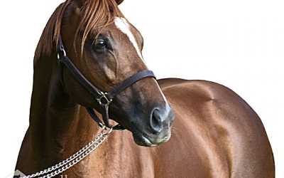 Singapore star's half-brother a must-see!