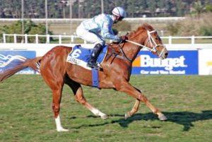 Laverna – Equus Champion