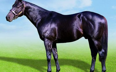 Classically bred Seventh Rock a must-see at KZN Sale