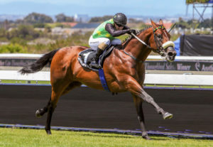 Captain Al colt a highlight at KZN Sale