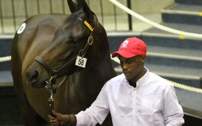 Proven and Promising Sires highlight Boland Draft