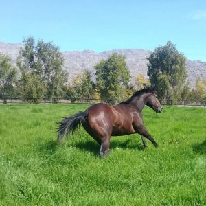 Boland Stud - News - Lot 100